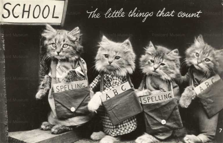 acb008-Dressed Cats Go School the Little Things that Count