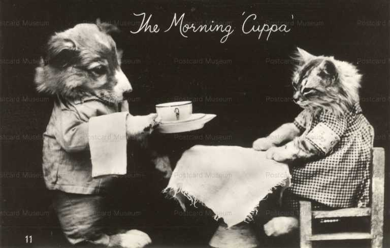 acb010-Dressed Cat Breakfast with Collie Dog the Morning Cuppa