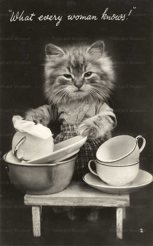 acb012-Dressed Cat Washing Dishes What Every Woman Knours!