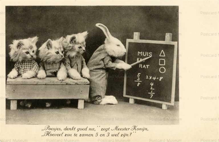acb021-Rabbit Teach Mathematics to 3Cat