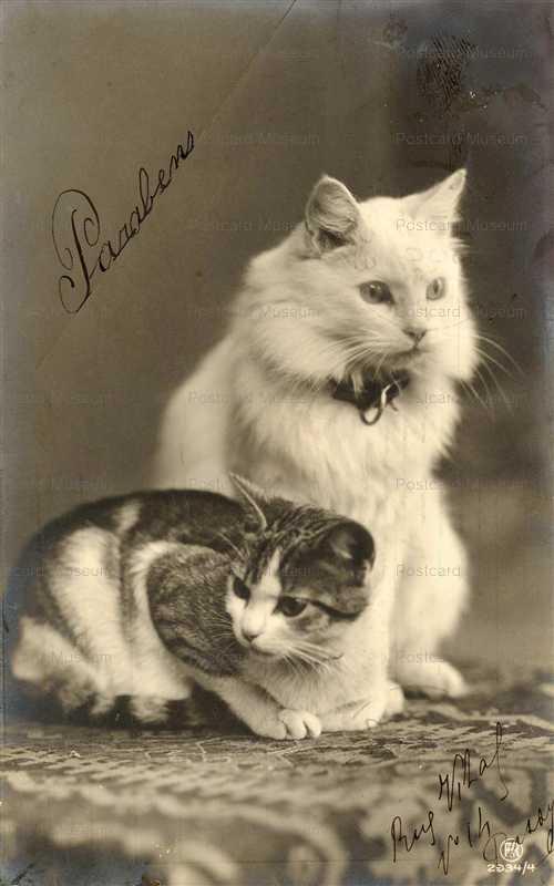 acb026-2CATs Persia Kitten