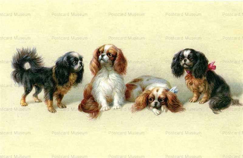 adc016 cavalier king charles spaniel lovely little dog 絵葉書資料館