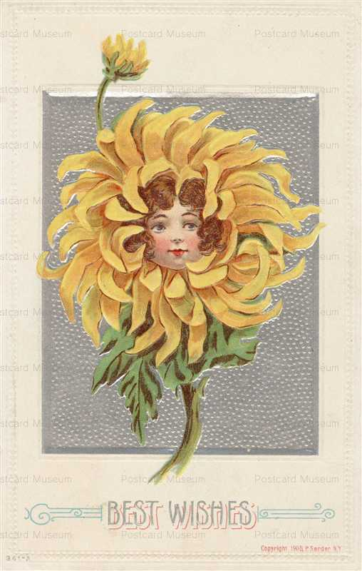 c138-Best Wish Girl in Sunflower P Sander