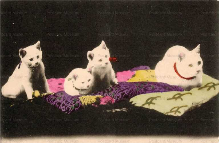 cat435-白猫4匹