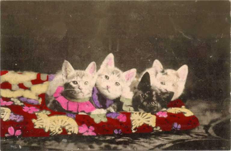cat440-猫4匹