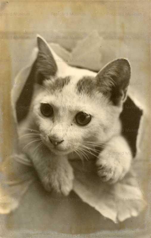 cat460-子猫