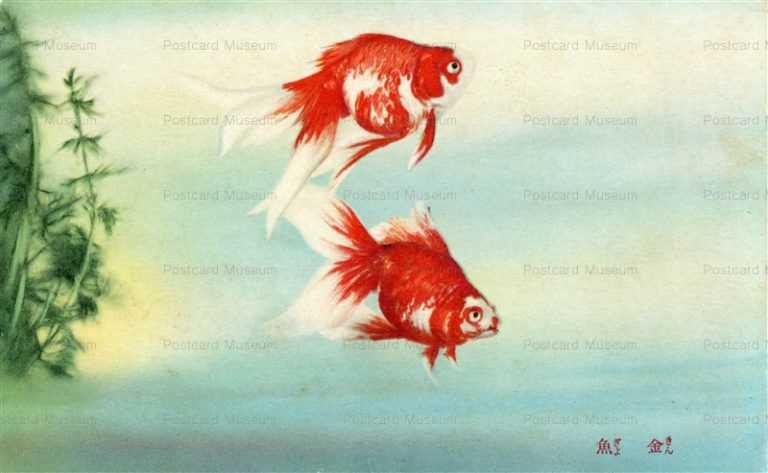 cka410-金魚