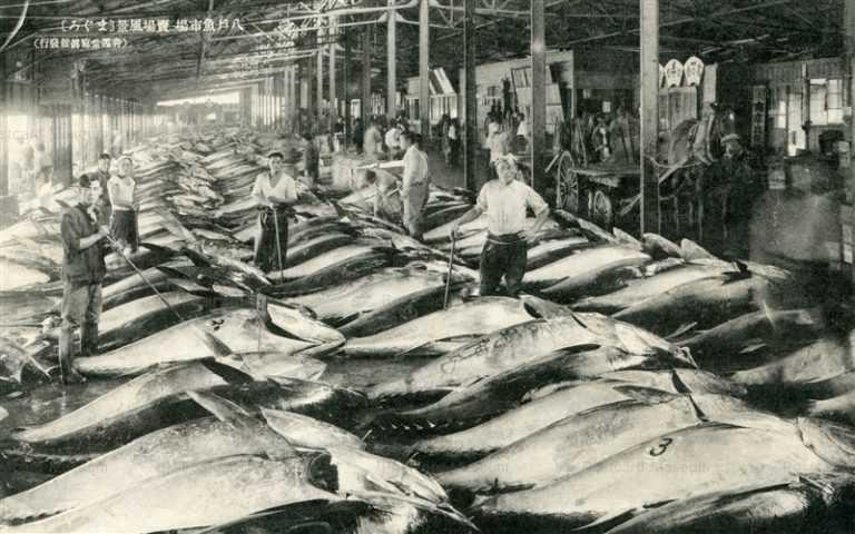 eb632-Hachinohe Minatomachi 八戸魚市場 まぐろ