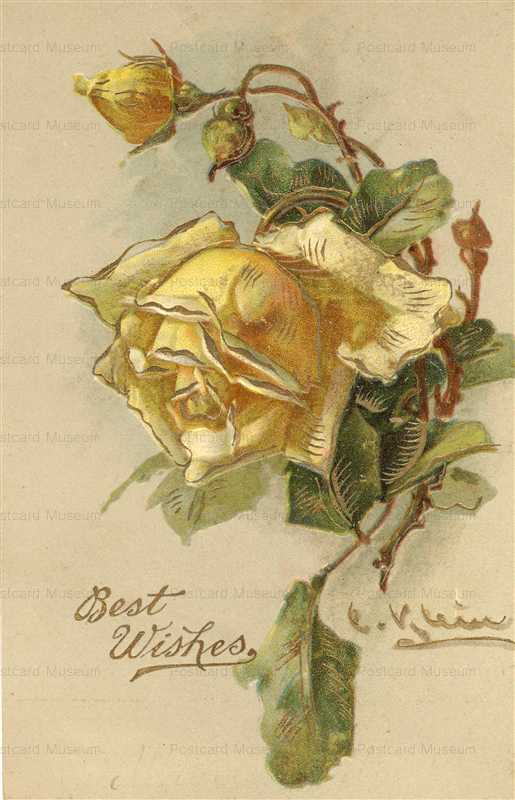 em081-Catherine Klein Yellow Rose