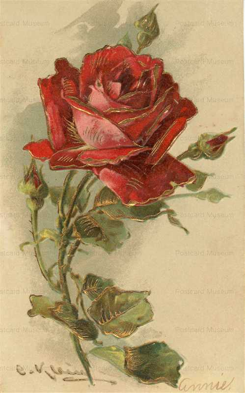 em082-Catherine Klein Red Rose