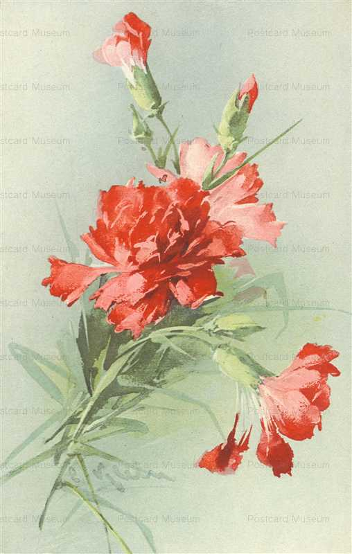 em085-Catherine Klein Red Carnations