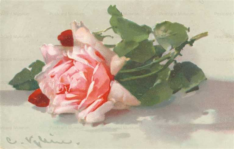 em090-Catherine Klein Wonderful Pink Rose