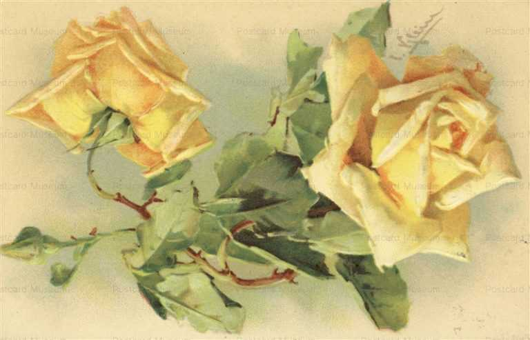 em095-Catherine Klein Yellow Roses