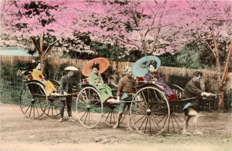 fj011-人力車 三台 桜