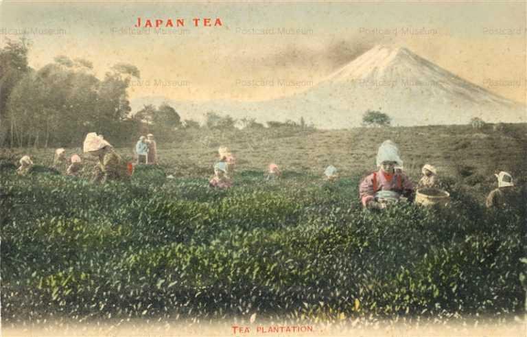 fk050-茶畑 富士山を背景に茶摘み風景 茶摘娘