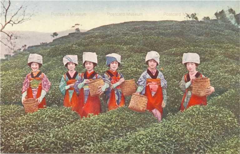 fk081-茶畑 茶摘娘六人