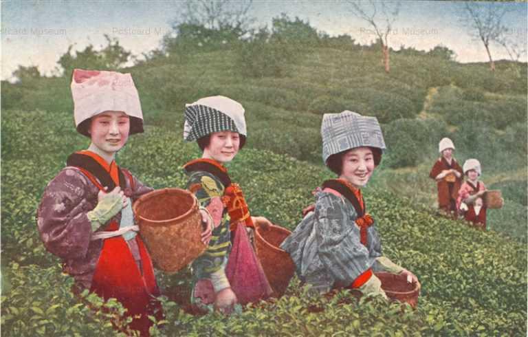 fk082-茶畑 茶摘娘達