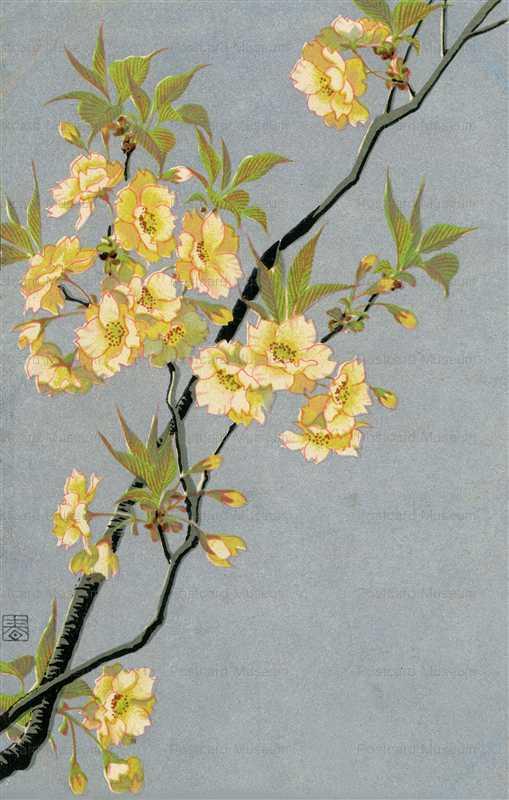 kfg211-春の花