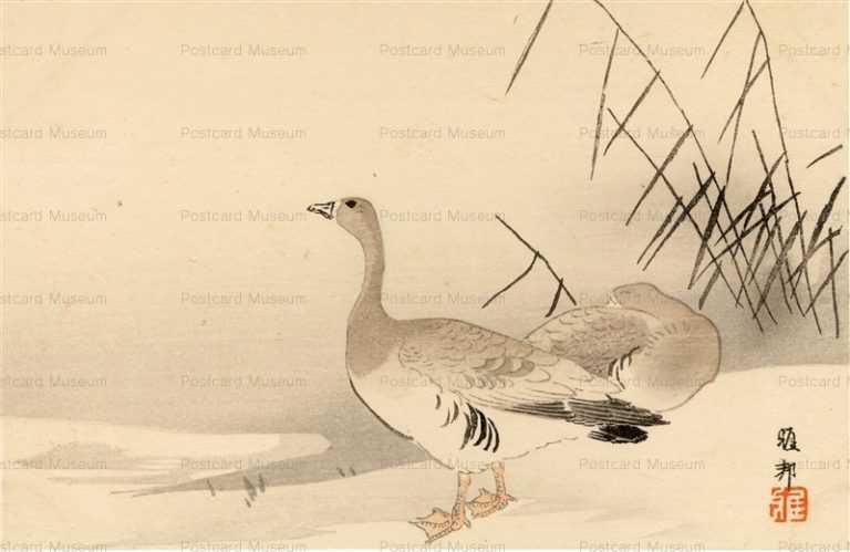 kfg815-橋本雅邦 家鴨
