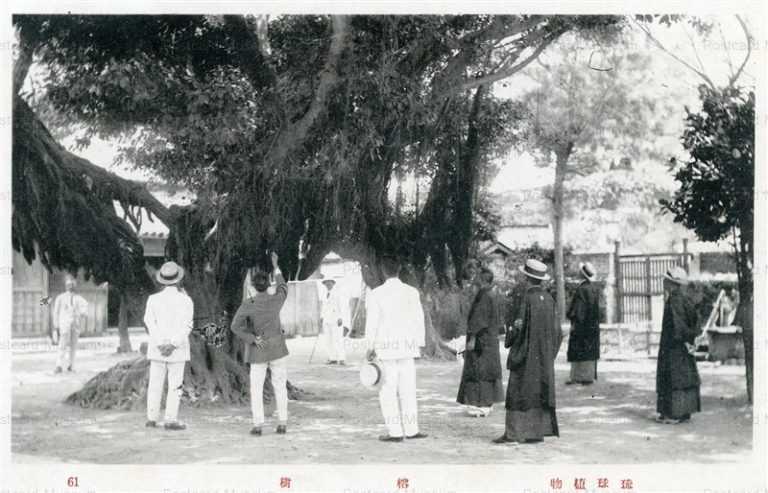 oky103-Yojyu 榕樹 琉球植物