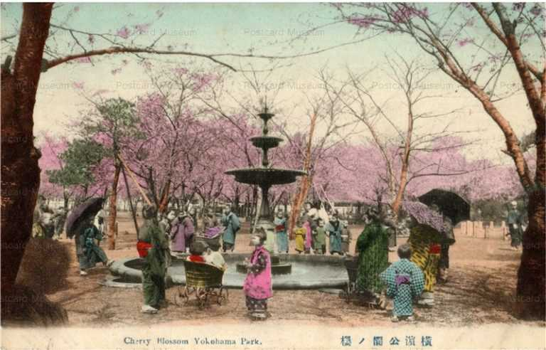 yb120-Cherry Blossom Yokohama Park 横浜公園の桜