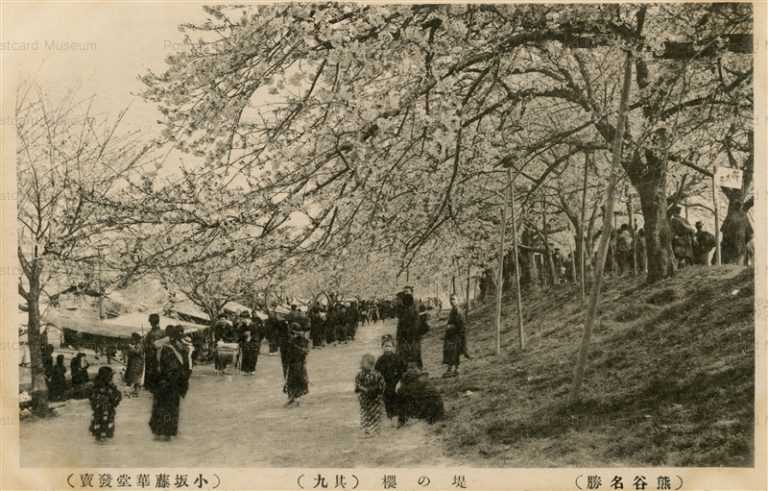ls880-Kumagaya 堤の桜 其九 熊谷名勝