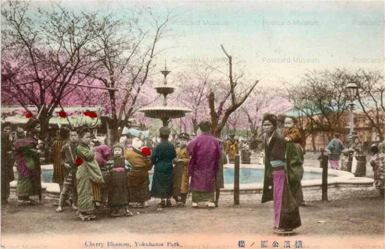 yb125-Cherry Blossom Yokohama Park 横浜公園の桜