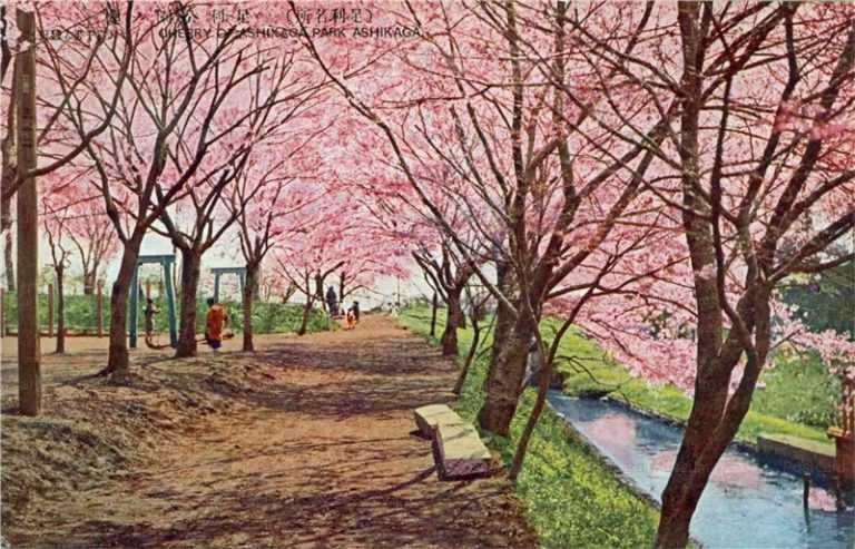 lt1395-Cherry Blossom Ashikaga Park 足利公園ノ櫻 栃木