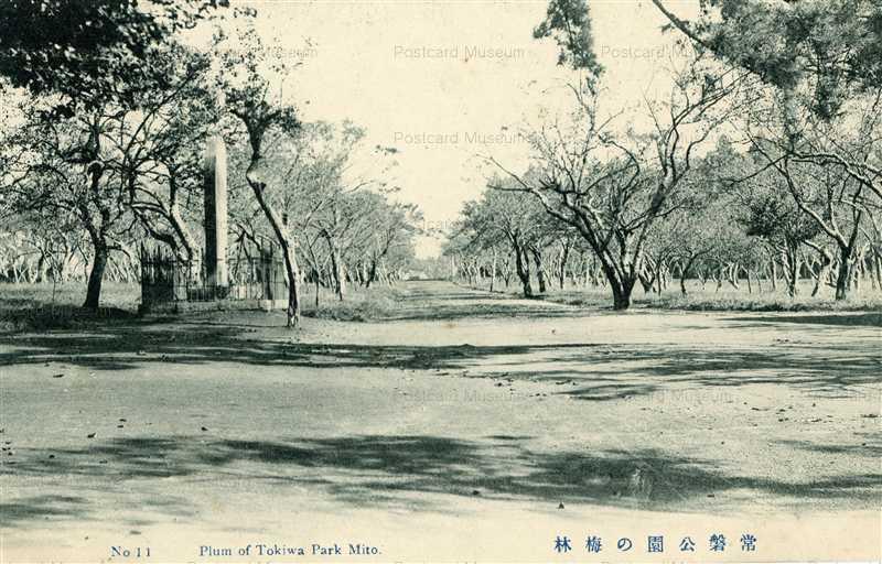 ll117-Plum Of Tokiwa Park Mito 11 常盤公園の梅林 茨城