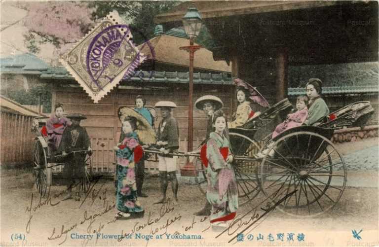 yb055-Cherry Flowers of Noge at Yokohama 54 横浜野毛山ノ桜