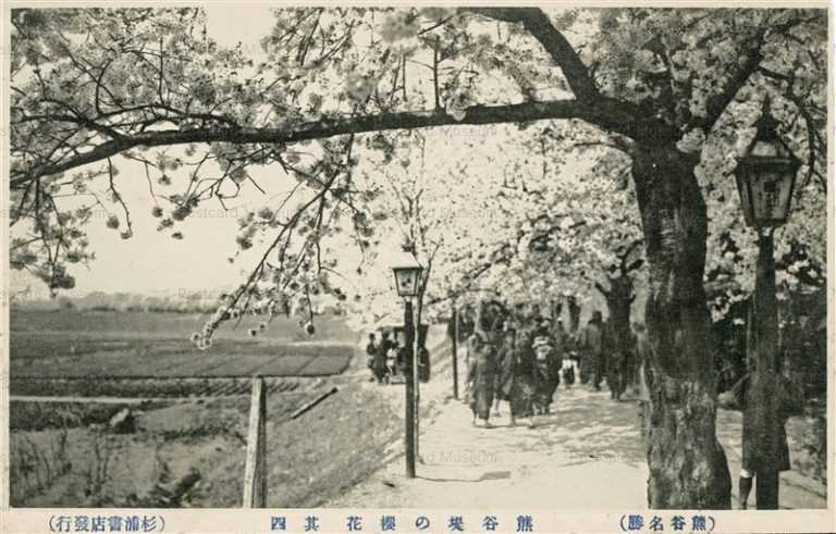 ls887-Kumagaya Bank Cherry Blossom Saitama 熊谷堤の櫻花 熊谷名勝 埼玉