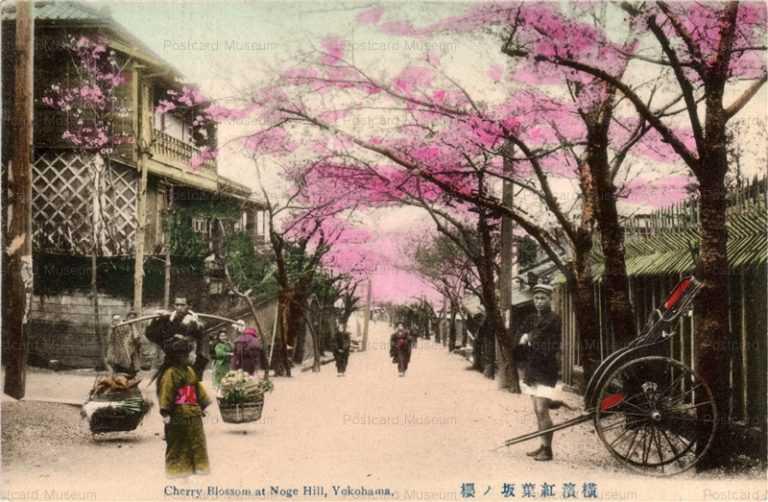 yb070-Cherry Blossom at Noge Hill,Yokohama 横浜紅葉坂ノ桜