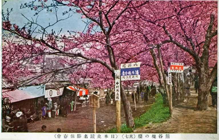 ls890-Kumagaya Bank Cherry Blossom Saitama 熊谷堤の桜 其七 埼玉