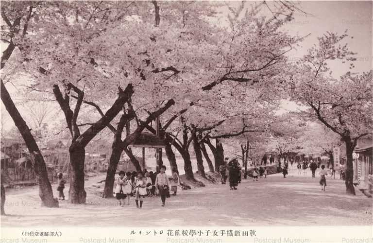 er855-Yokote Park Girl School 横手女子小学校前 花のトンネル 秋田