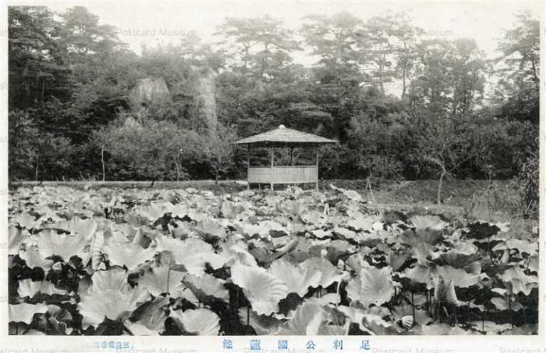 lt1405-Ashikaga Park 足利公園蓮池