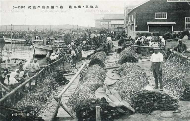 hj165-Hiroo Port 北海道廣尾港 構内鰯漁獲の盛況 其の一