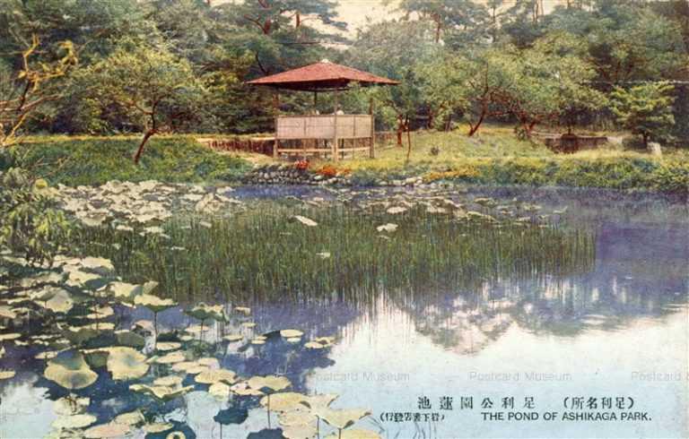 lt1400-Ashikaga Park 足利公園蓮池 足利名所 栃木