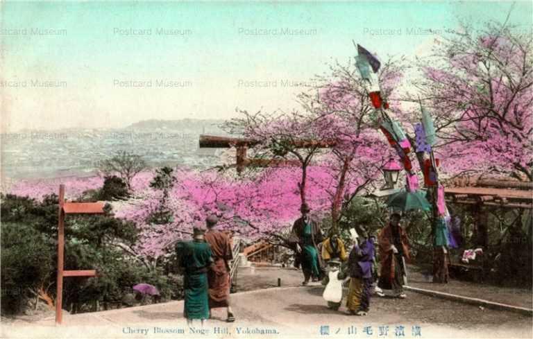 yb080-Cherry Blossom Noge Hill,Yokohama 横浜野毛山ノ桜