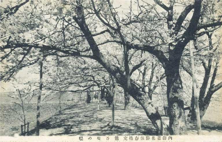 ls885-Kumagaya 熊谷堤の桜 内務省名勝保存指定 埼玉