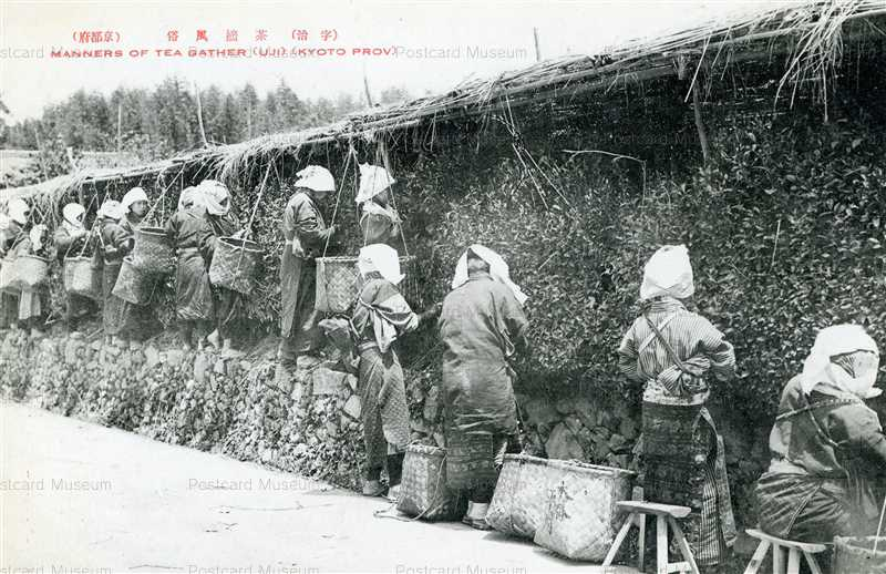 kfb041-Manners Of Tea Gather Uji Kyoto Prov 宇治 茶摘風俗 京都府