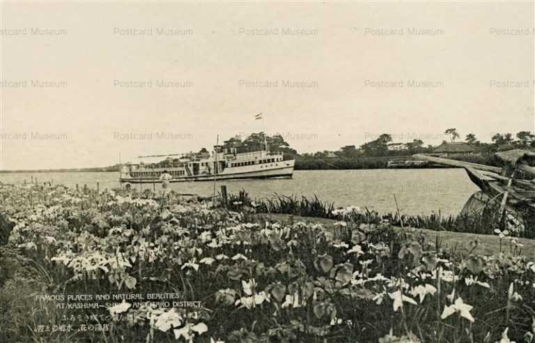 ll1075-Itako Ibaraki 妍を競って咲きそろふ菖蒲の花、水郷のま晝 潮来 茨城