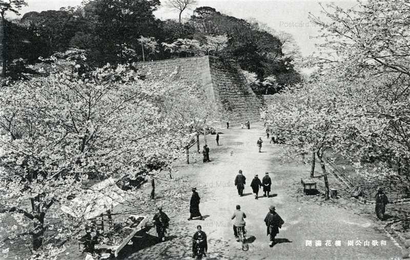 zy145-Wakayama park 和歌山公園 桜花満開