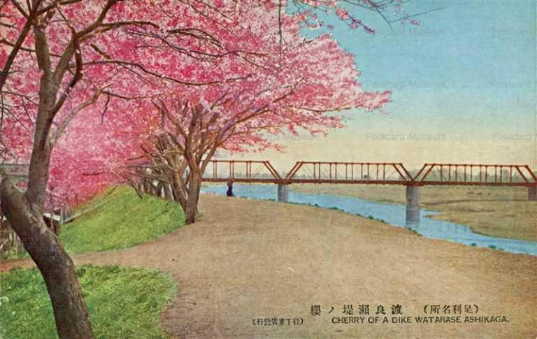 lt1420-Cherry of Dike Watarase Ashikaga 渡良瀬堤ノ櫻 足利名所 栃木