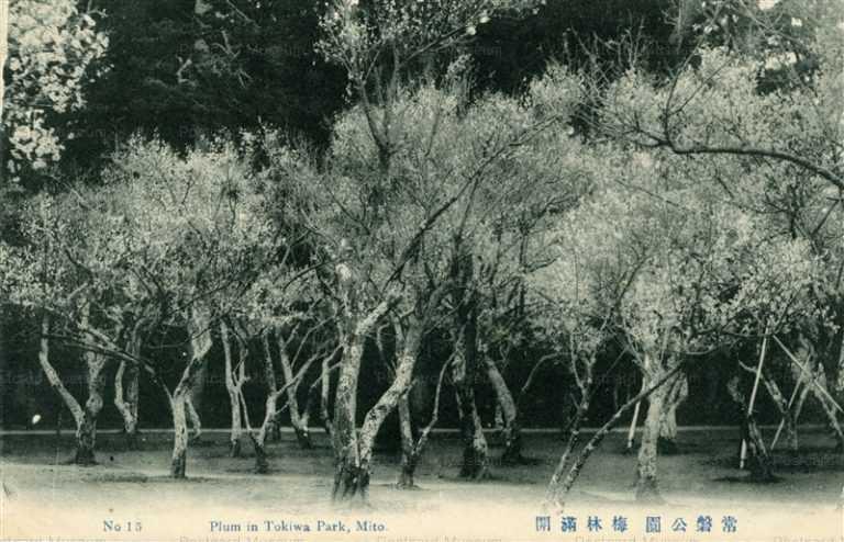 ll115-Plum In Tokiwa Park Mito 15 常盤公園 梅林満開 茨城