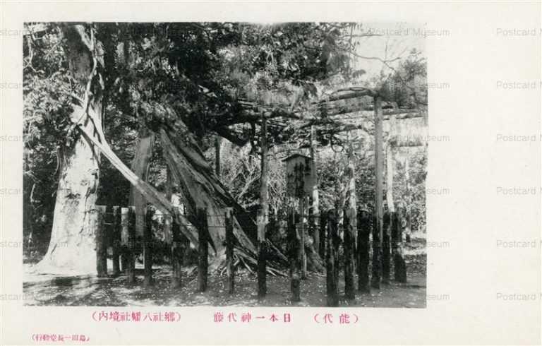er1465-Jindai Wisteria Noshiro 日本一神代藤 能代