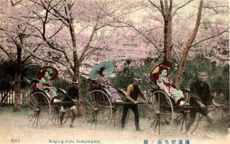 yb060-Shiging Girls Yokohama 55 横浜野毛山ノ桜