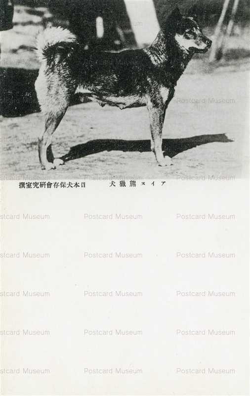cga150-アイヌ熊猟犬