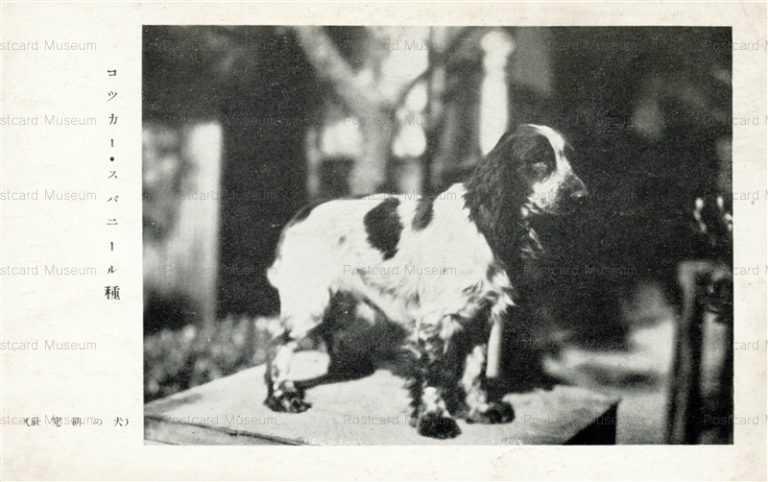 cga130-コッカー・スパニール種 犬の研究社