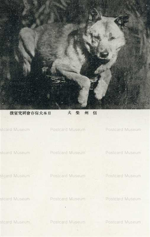 cga140-信州柴犬