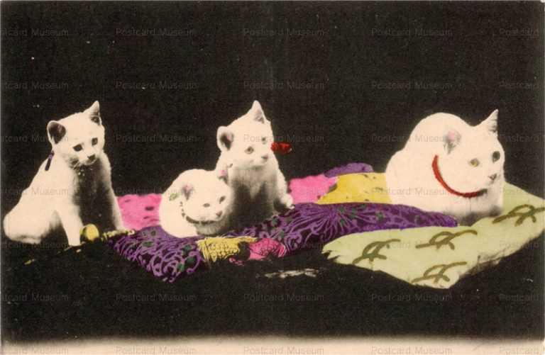 cat002-白猫4匹